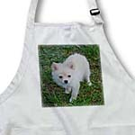 click on White Cream Pomeranian Puppy  to enlarge!