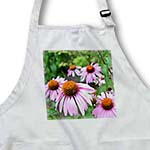 click on Summer Echinacea Flowers to enlarge!