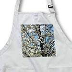 click on Spring Flowering Tree Flowers Nature to enlarge!