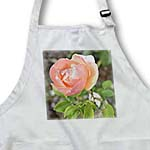 click on Sweet Peach Rose Floral- Flowers- Flower Photography to enlarge!