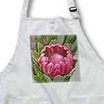 click on Protea Flower- Floral Photography- Hawaiian to enlarge!