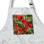 click on Red Poppy Anemone - anemone coronaria, poppy anemone, spanish marigoldanemone, flower to enlarge!