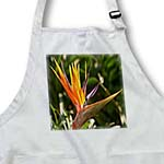 click on Bird Of Paradise - strelitzia, bird-of-paradise, flower, primary colors, tropical flower to enlarge!