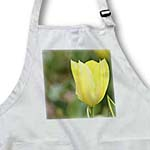 click on Yellow Spring Tulip- Flowers- Floral Photography to enlarge!