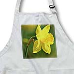click on Pretty Spring Daffodil Flower- Floral Photography to enlarge!