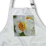 click on White and Orange Daffodil- Spring Flowers to enlarge!