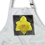 click on Yellow Daffodil Floral- Spring Flowers to enlarge!