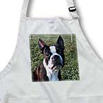 click on Boston Terrier Portrait to enlarge!