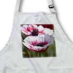 click on Pretty Pink and White Anemone Flower - Spring Photography to enlarge!