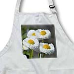 click on White English Daisy Flowers in Spring - Floral Photography to enlarge!