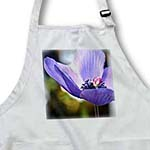 click on Sweetest Purple Anemone Flower - Spring Photography to enlarge!