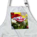 click on Sweet Anemone Flower - Pink and White Spring Flowers to enlarge!