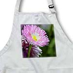 click on Pretty Pink English Daisy Flower - Spring Floral Photography to enlarge!