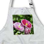 click on Pink English Daisy Spring Flowers - Spring Photography to enlarge!