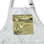 click on Eurasian Curlew birds on a beach to enlarge!