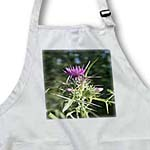 click on Syrian Thistle Flowerhead - Thistle, flowering plants, Scotland, agavanos, purple flower, wildflower to enlarge!