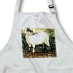 click on Pygmy Goat to enlarge!