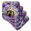 click on Clock Flower - passion flower, purple, nature, passiflora, wildflower of tennessee, christs thorn to enlarge!