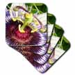 click on Clock Plant - passion flower, purple, nature, passiflora, wildflower of tennessee, christs thorn to enlarge!