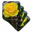 click on The Yellow Rose - rose, roses, yellow rose, yellow roses, birth flowerjune, joy, friendship to enlarge!
