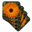 click on Summers Bride - flower, asteraceae, birth flower, calendula, flowers, marigold, orange to enlarge!