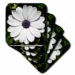 click on White African Daisy - daisy, south african daisy, cape daisy, blue eyed daisy, white, african daisy to enlarge!