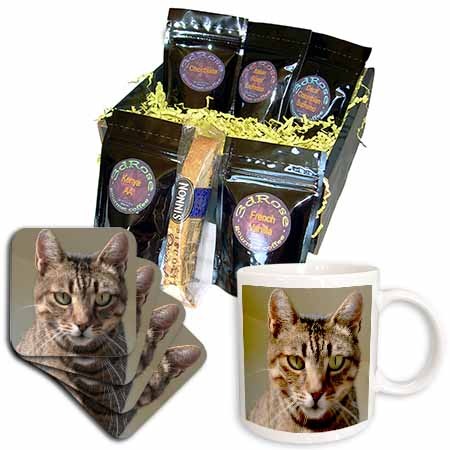 click on Tabby Cat Portrait - animal, moggie, tabbies, tabby cat, cat, cats, cute to enlarge!