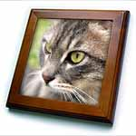 click on Long Haired Tabby Cat - animal, moggie, tabbies, tabby cat, cat, cats, cute to enlarge!