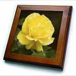 click on One Yellow Rose - rose, roses, yellow rose, yellow roses, birth flowerjune, joy, friendship to enlarge!