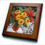 click on Red and Gold Lantana -flower, flowers, lantana, plant, plants, shrub verbena, verbena to enlarge!