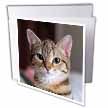 click on Hello Kitty - animal, moggie, tabbies, tabby cat, cat, cats, cute to enlarge!