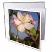 click on Apple Blossom - apple, apple tree, apples, blossom, blossoms, fruit tree, pink blossom to enlarge!