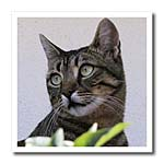 click on Cat Portrait - animal, moggie, tabbies, tabby cat, cat, cats, cute to enlarge!