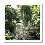 click on Ocala National Forest - Juniper Springs to enlarge!