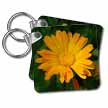 click on Bulls Eyes - flower, asteraceae, birth flower, calendula, flowers, marigold, yellow to enlarge!