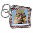 click on Cat In A Window - animal, moggie, tabbies, tabby cat, cat, cats, cute to enlarge!