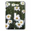click on Daisy Meadow - daisy, dasies, oxeye daisy, dog daisy, margarite, moon daisy, ox eye daisy to enlarge!
