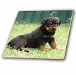 click on Rottweiler puppy to enlarge!