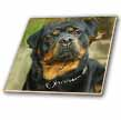 click on Rottweiler Portrait to enlarge!