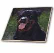 click on Rottweiler to enlarge!