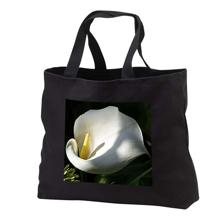 click on Morning Has Broken - calla, calla lily, callas, lilies, easter lily, weddings, majestic to enlarge!