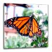 click on Monarch Butterfly to enlarge!