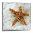 click on Star Fish On Coral to enlarge!