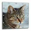click on Up Close and Personal - animal, moggie, tabbies, tabby cat, cat, cats, cute to enlarge!
