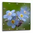 click on Forget -Me -Not - alzheimers disease, forget me not, friendship, grandparents day, love, myosotis to enlarge!